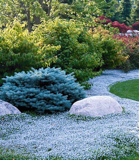 Www Baldur Garten winterharte bodendecker kollektion bodendecker stauden