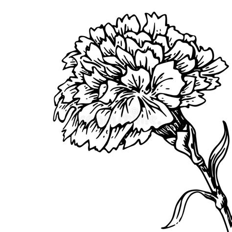 carnation flower sketch of tattoo stock illustration