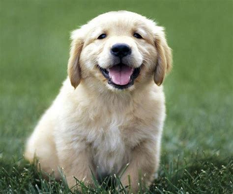 breeds in india small dogs breeds in india pet photos gallery 0wkdmy12qd