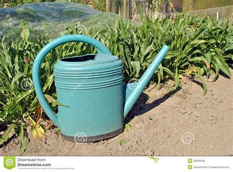 Watering Vegetable Garden Watering Can In Vegetable Garden Stock Photo Image 26509538