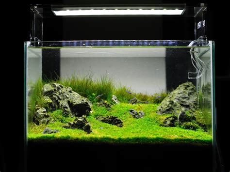 Led Aquasky aquasky led revealed in stunning detail by ada thailand reef builders the reef and marine