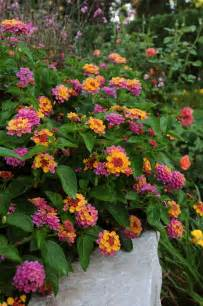 heat resistant plants all the dirt on gardening heat tolerant plants for the