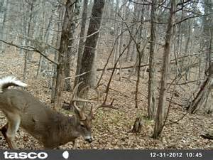 Twra Trophy Room by Tennessee Deer Talk While You Were Out