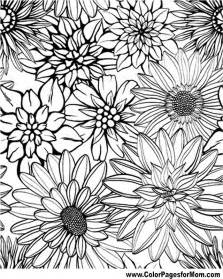flower coloring pages for adults free flowers coloring pages