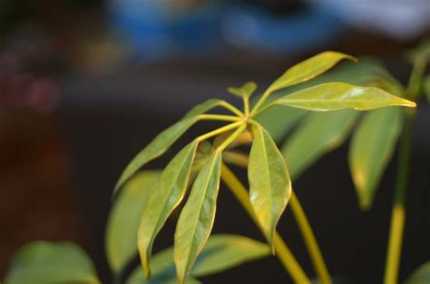 houseplants identify by leaves myideasbedroom com house plant identification tool myideasbedroom com