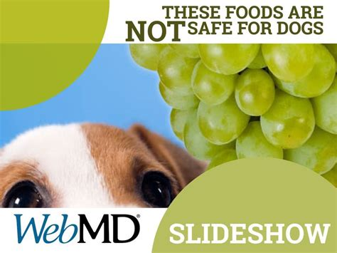 yorkie kidney failure symptoms slideshow foods your should never eat kidney failure pup and