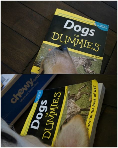puppies for dummies owner s reference book dogs for dummies chewyinfluencer