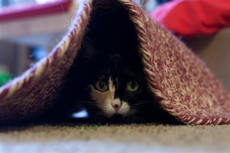 Cat Hiding Bed by Hiding Spots For Cats Lovetoknow