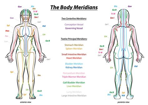 medicine meridians diagram science proves meridians exist how you can sense this energy