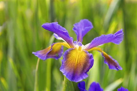 free detailed macro images and stock photos freeimages iris free stock photos goog smells macro petals hd flower wallpapers colourful hd