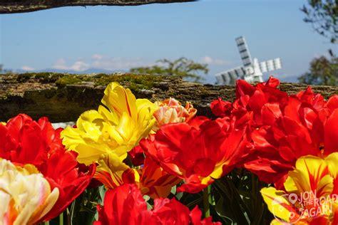 roozengaarde skagit valley tulip festival jon  road