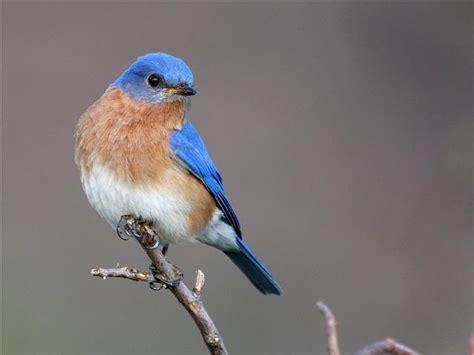 2nd atlas of breeding birds in pennsylvania on sale for