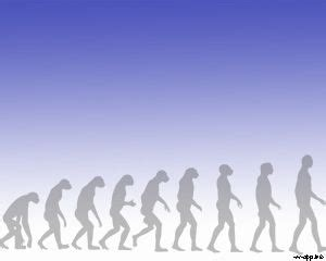 human powerpoint template human evolution ppt