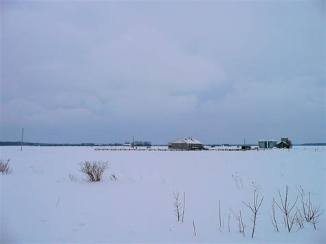 o113 ontario snowy owl habitat