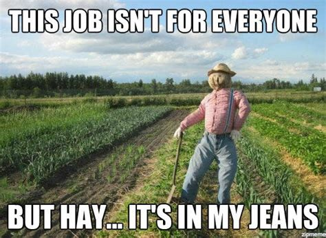 Hay Meme - this job isnt for everyone but hay its in my jeans