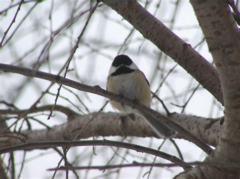 attracting and feeding birds in your yard attracting and