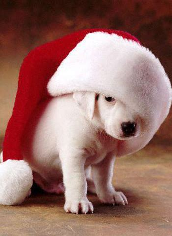 funny merry christmas wishes venus wallpapers