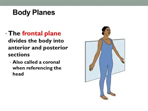 a section that divides the body into left and right anatomical positions ppt video online download