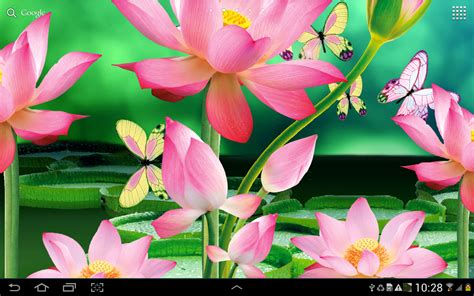 lotus live wallpaper app android su play