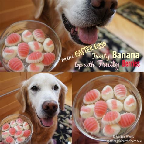 are eggs for dogs safer easter egg treats for your golden woofs