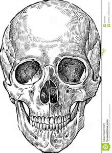 Desenho do cr 226 nio humano foto de stock royalty free imagem