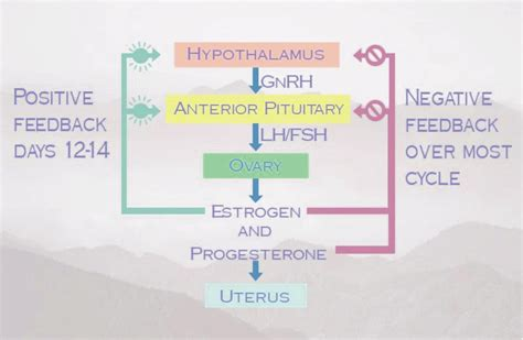 cara membuat hormon zpt proses menstruasi serta hormon yang berpengaruh saat haid