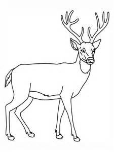 free printable animal deer coloring sheet pictures kids coloring pages