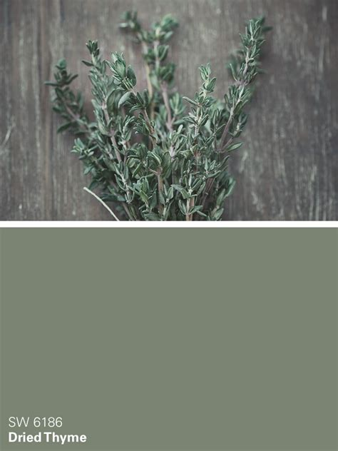 Sw Snopy Grey sherwin williams green paint color dried thyme sw 6186 on the hunt for green green paint