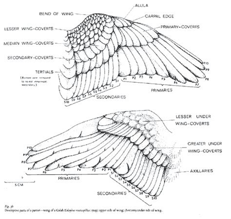 bird wing diagram 1000 images about bird felting reference on