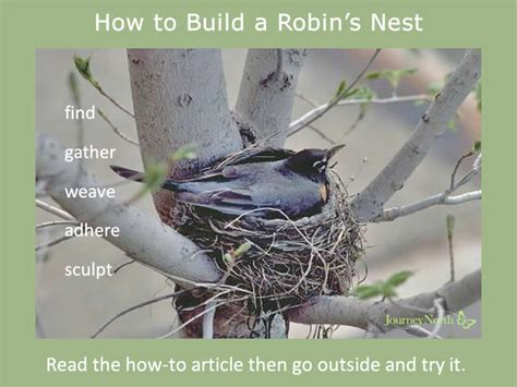 How To Make A Bird Out Of Construction Paper - american robins migration journal