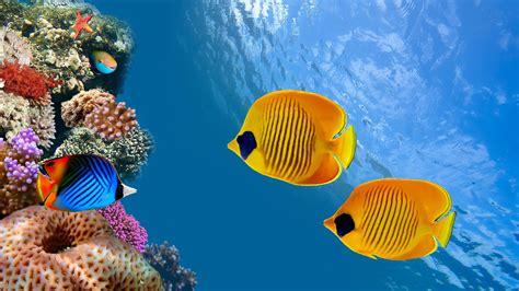 underwater sea fish underwater  ultra hd wallpaper