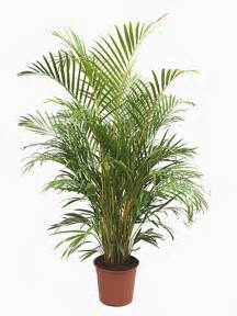 indoor house plants for sale indoor house office plants for sale online uk wide