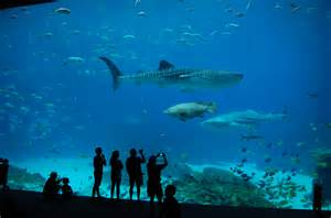 The Aquarium The Extraordinary Aquarium The Culture