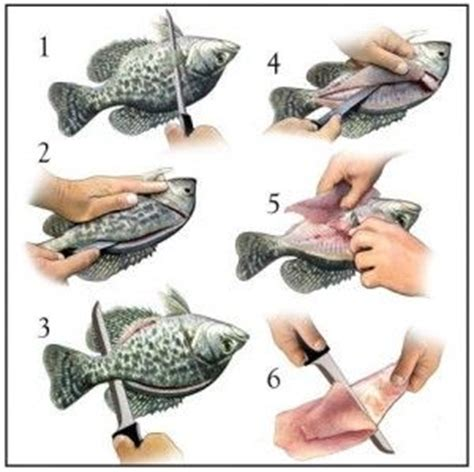 how to fillet a crappie how to fillet crappie bluegill butchering