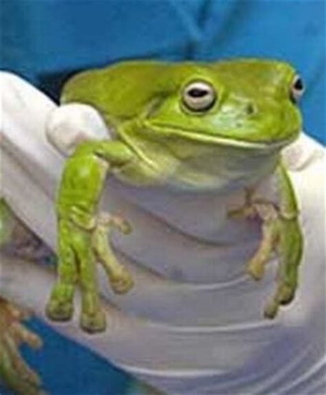 ate plastic wrapper a frog that ate some plastic wrap 3 pics