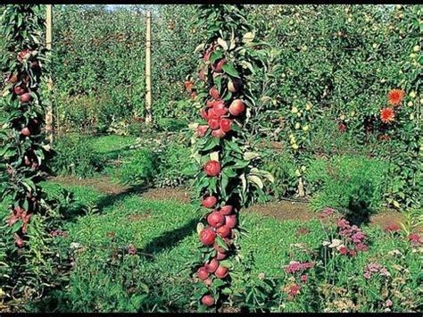 planter un arbre fruitier pour jardin