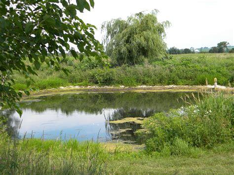 Backyard Summer Ideas A July Walk Through Our Tallgrass Prairie The Cayenne Room