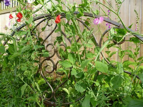 backyard trellis ideas diy garden trellis ideas trash backwards blog