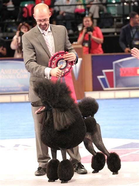 national show breed results eukanuba show breed results 2017 breed dogs spinningpetsyarn