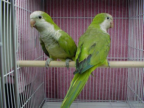 wallpaper green with birds green parrots latest hd wallpapers free hd wallpapers