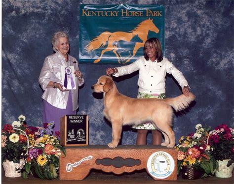 everglades golden retriever club s golden retrievers florida golden retriever puppies golden