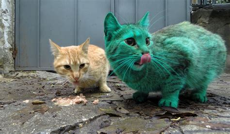 Green Cat what s the deal with this green cat