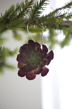 Bough Succulent live succulents as tree ornaments l a at home