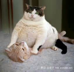 really fat cats funny cat photos with words pics of fat