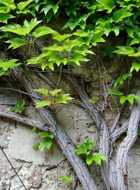 piante in vaso invernali natura piante invernali da balcone ecco alcune idee da