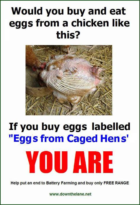 money with chickens how to make up to 12k a year with just 15 chickens books stop eggs from caged hens poster the