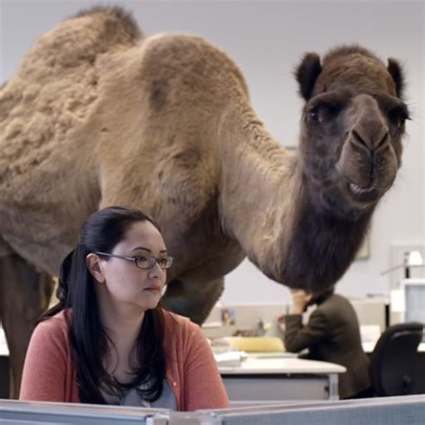 geico camel commercial hump day hump day not so unusual midweek delusions and