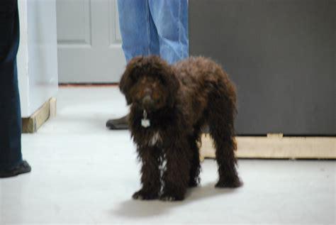 dog house nashville the safe house knoxville tn home safes gun safes commercial safes safe moving and