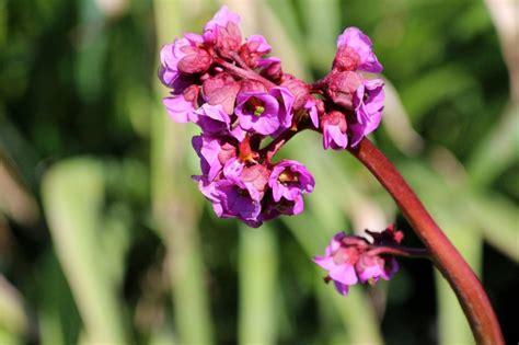 fiori profumati da giardino fiori invernali pi 249 profumati