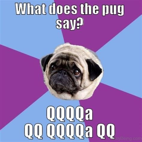 what do pugs like to play with 88 superb pug memes pictures